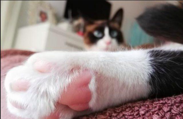 La peculiar razón por la que muchos gatos tienen las patas blancas