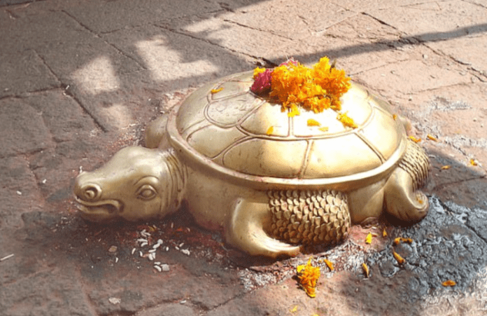 Apareció una tortuga dorada y ahora la veneran como la encarnación de un Dios