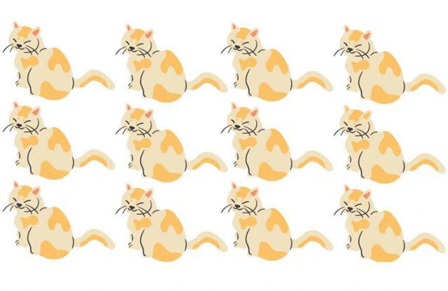 Reto viral (para ponerte a prueba): Encontrá el gato diferente en 30 segundos