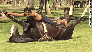 'Horse yoga' tames more than animals
