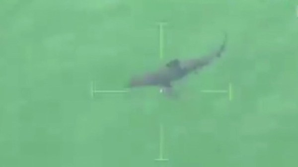 A bump, then a bite: Shark hits kayaks in Massachusetts - CNN