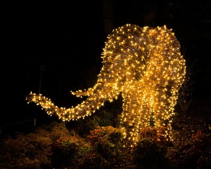 Christmas Zoo Riverbanks Lights