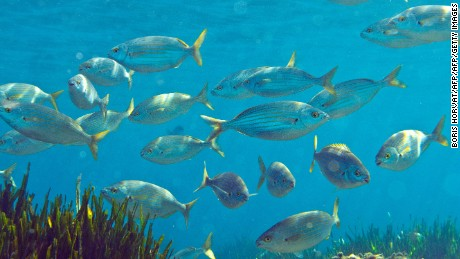 Ocean oxygen levels drop 2% in 50 years, Nature study finds