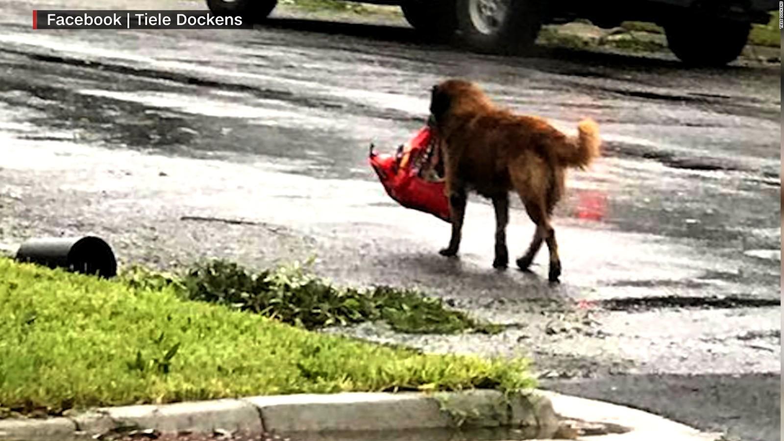 https://i1.wp.com/cdn.cnn.com/cnnnext/dam/assets/170828202247-otis-dog-hurricane-harvey-viral-picture-ebof-00004503-full-169.jpg