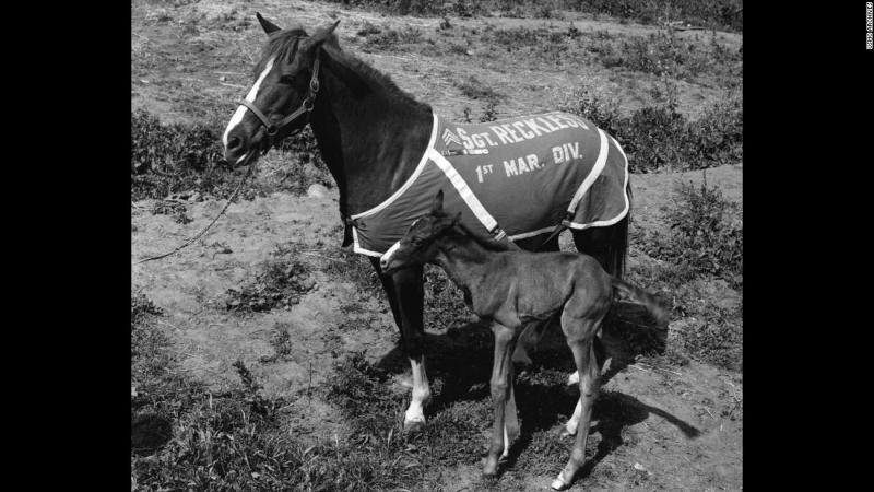 Sergeant Reckless: America's greatest war horse - CNN