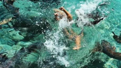 Zarutskie was pulled underwater by the nurse shark