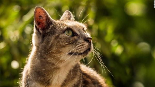 New Zealand village plans to ban all cats - CNN