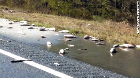 Dead fish scattered on the highway as floodwaters recede in North Carolina