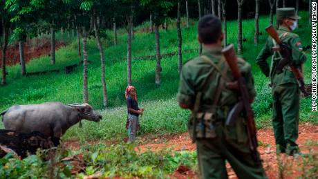 This photo taken on June 26, 2017 shows a Wa ethnic woman with a buffalo seen next to members of the United Wa State Army in the Poung Par Khem region, near the Thai-Myanmar border.