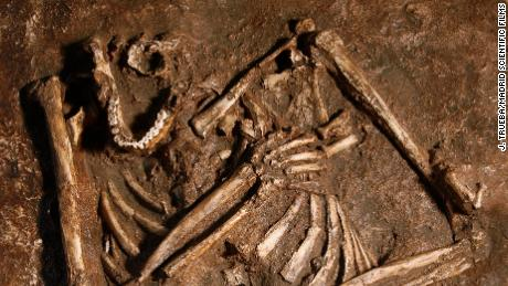 Neanderthals might not be the hunched cavemen we thought they were, study says