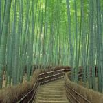 36 Most Beautiful Places In Japan Photos Cnn Travel