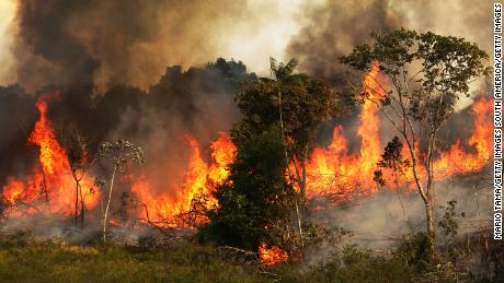 The Amazon lost the equivalent of 8.4 million soccer fields this decade due to deforestation