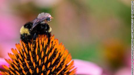 Sette semplici cose che potete fare per salvare le api Nazionale di Api Giorno
