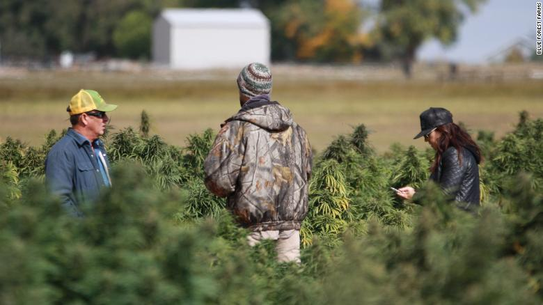 After it was legalized in December, hemp has become one of the most lucrative crops for US farmers.