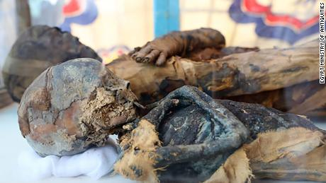 Egypt discovers a tomb full of mummified cats, mice and other animals