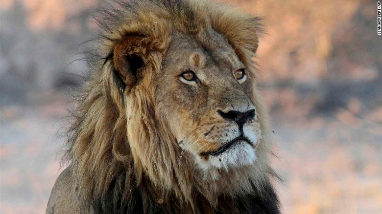 The slaying of Cecil the lion sparked international outcry