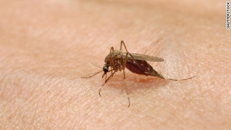 Despite cooler temperatures, new cases of a potentially fatal mosquito virus were confirmed in Massachusetts