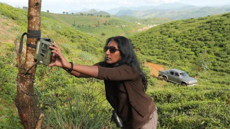Anjali Watson attaches a motion-detecting camera to a tree.