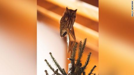 Qui a besoin d'un topper d'arbre quand vous avez un hibou?