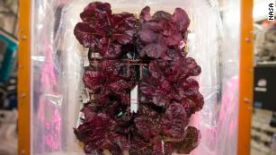 Space-grown lettuce is safe to eat, says study. Delicious, say astronauts