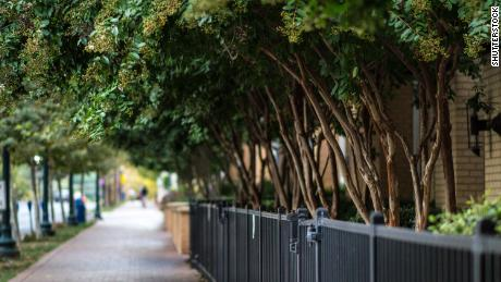 Planting trees could help this city prevent 400 premature deaths