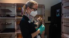 The San Diego Humane Society's Nina Thompson holds a kitten at the kitten nursery in San Diego, California.