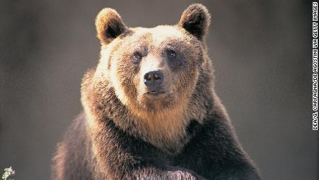 A bear in Italy has been sentenced to death after attacking hikers. Activists want a stay of execution