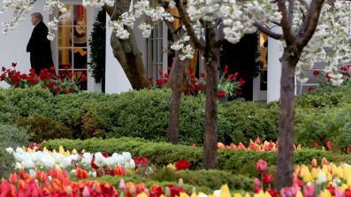 Melania Trump announces Rose Garden renovation - CNNPolitics