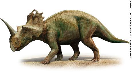 ไดโนเสาร์ได้รับการวินิจฉัยว่าเป็นมะเร็งกระดูกที่สร้างความทุกข์ทรมานให้กับมนุษย์ในปัจจุบัน