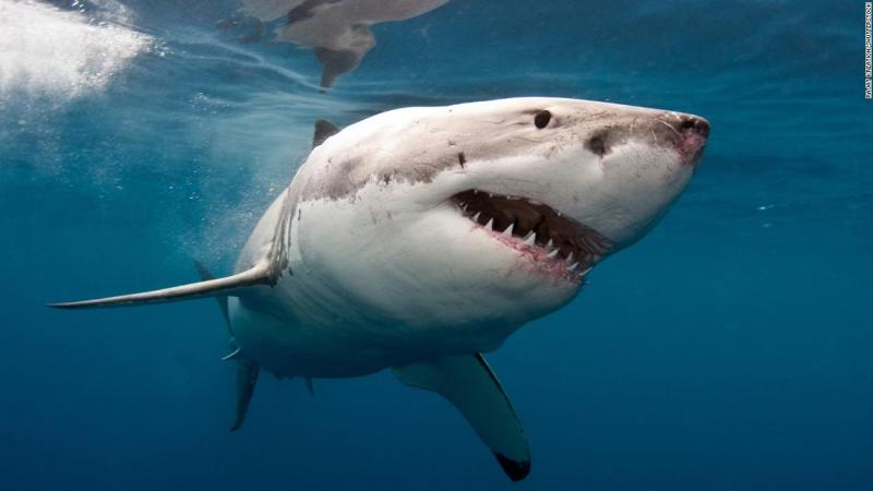 Man killed in shark attack at popular Western Australia beach