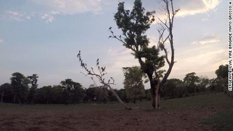 นกมาคอว์เกาะอยู่บนต้นไม้ในสถานที่ศักดิ์สิทธิ์หลังไฟไหม้ในสัปดาห์นี้