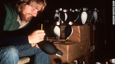 Bill Bridgeland, a Project Puffin research assistant, painting puffin decoys in 1977.