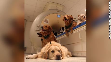 A dog's brain is not hard to take care of human faces