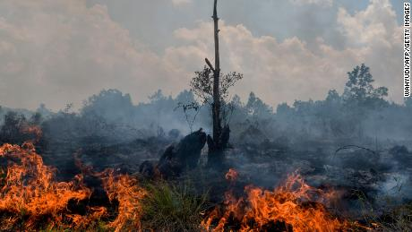 "<a href=""https://www.cnn.com/interactive/2019/11/asia/borneo-climate-bomb-intl-hnk/"">Borneo is burning: How the world's demand for palm oil is driving deforestation in Indonesia</a>"