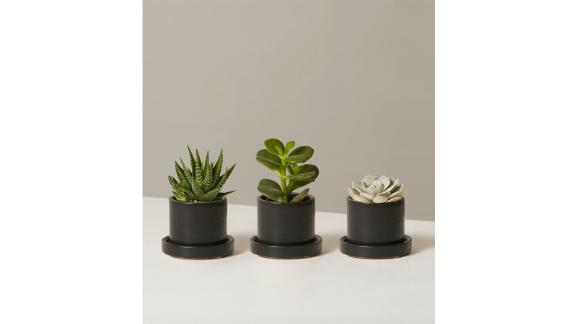 The Sill Succulent Trio