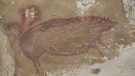 A wart painted on the wall of a cave 45,500 years ago is the oldest depiction of an animal
