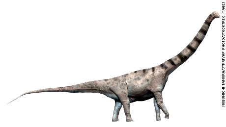 The newly discovered dinosaur is believed to have a body mass or the equivalent of an Argentinosaurus, measuring up to 40 meters and weighing up to 110 tons.