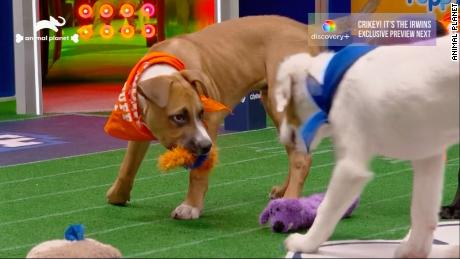 Puppy Bowl XVII: Team Ruff wins with dramatic last-minute comeback