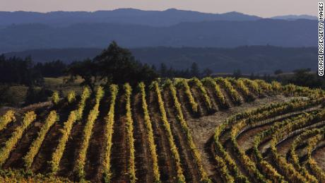 A winery will pay you $ 10,000 a month to work and live rent-free in Sonoma