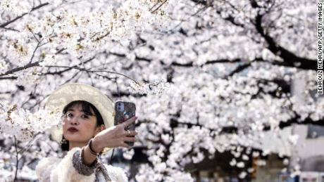 Japan just recorded its earliest cherry blossom bloom in 1,200 years. Scientists warn it's a symptom of the larger climate crisis