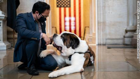 Comfort dogs find bipartisan support on Capitol Hill