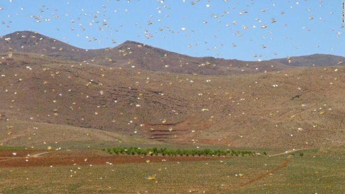 Lebanon battles swarms of locusts after wind changes direction | Latest News Live | Find the all top headlines, breaking news for free online April 27, 2021