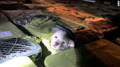 """One of the puppies found by Love Home in their raid on a truck in Sichuan province on May 3. They believe it was destined for a """"pet mystery box."""""""
