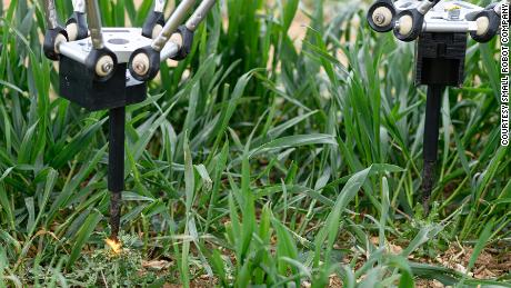 The robot zapping weeds with electricity.