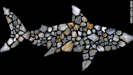 This silhouette of a shark is composed of shark fossils.