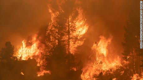 Trees burn along Highway 89 during the Tamarack Fire in the Californian city of Markleeville on July 17.