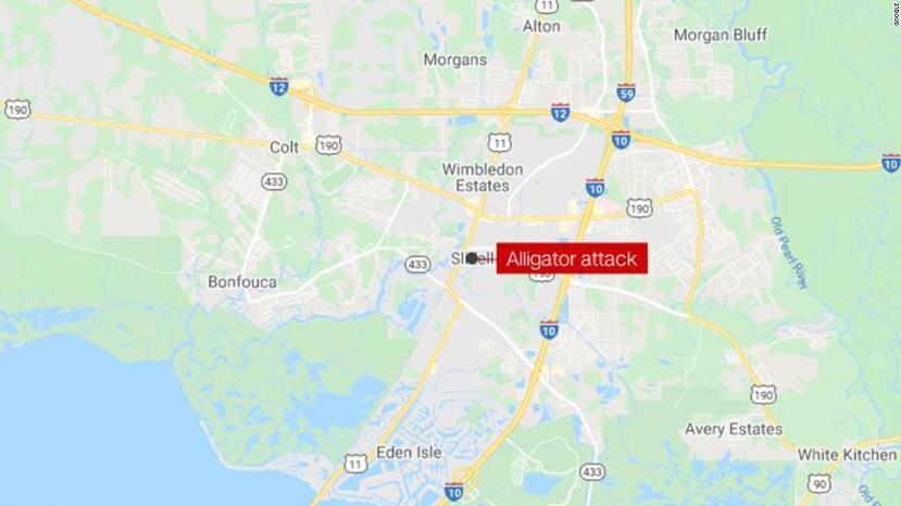 Coroner identifies remains inside 500-pound alliga…