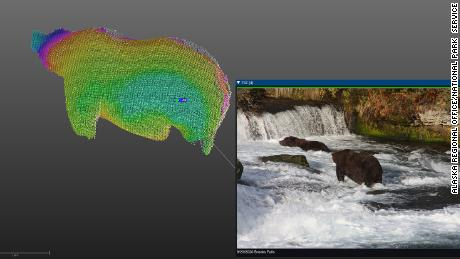 A 3-D model of 747 is shown next to a picture of the bear; 747 was the 2020 winner of Fat Bear Week at Katmai National Park and Preserve, and had the highest estimated weight.