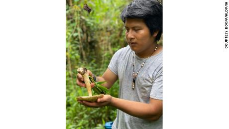 Fabian Jimbijti (pictured), from  Angel Rouby in the Morona Santiago province of Ecuador, forages food from the jungle.
