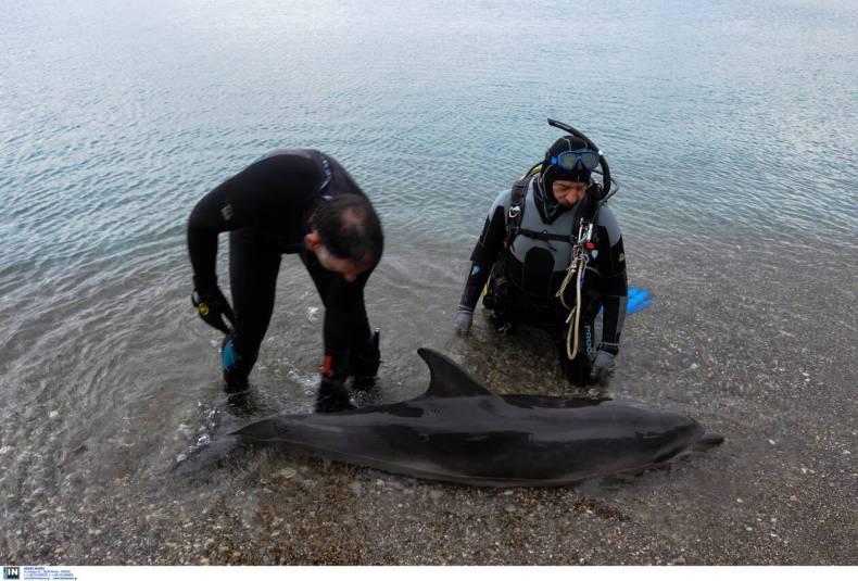 https://cdn.cnngreece.gr/media/news/2021/03/20/258938/photos/snapshot/loutraki_delfini.jpg